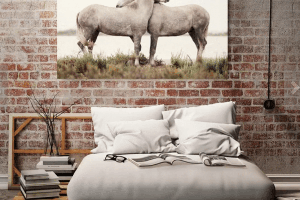 Two white horses photo on wall