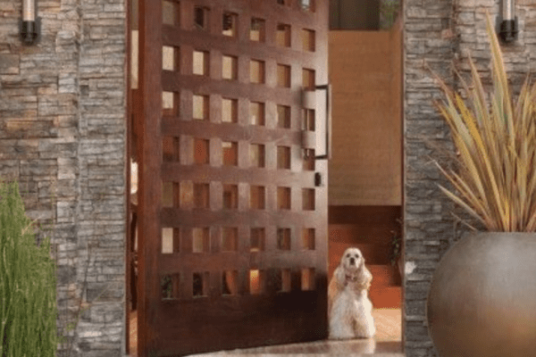 White poodle standing near opened door