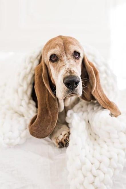 dog on a blanket