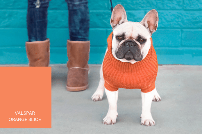 dog in orange sweater